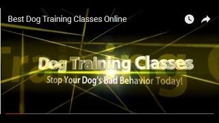 Best Dog Training Classes Online