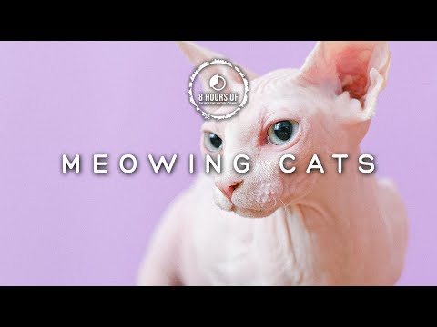 CAT SOUNDS TO ATTRACT CATS, CAT NOISES TO ANNOY CATS, CAT MEOWING SOUNDS TO MAKE CAT HAPPY 8 HOUR