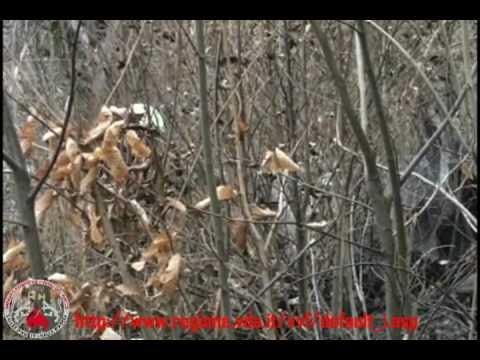Arnad: Bruciano circa 1500 metri quadri di boscaglia