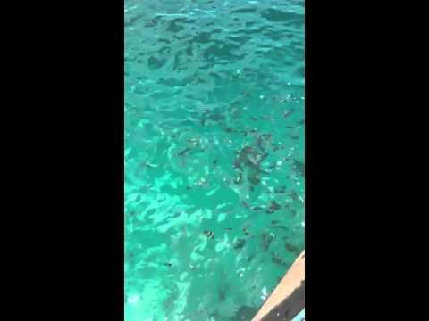 Awesome fish sanctuary in Looc, Romblon