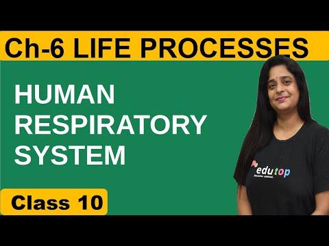 HUMAN RESPIRATORY SYSTEM- LIFE PROCESSES CH #6 (CLASS X, NEET)