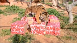 Kαλά Χριστούγεννα από το Αττικό Ζωολογικό Πάρκο