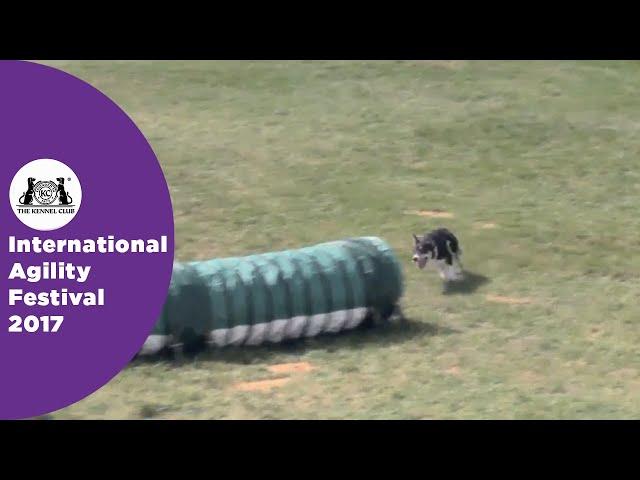 Kennel Club British Open Semi Final Large - Part 2 | International Agility Festival 2017