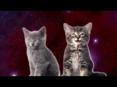 Мультфильм про поющих котов