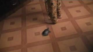 Дрессированная черепаха Философ. Невероятно!