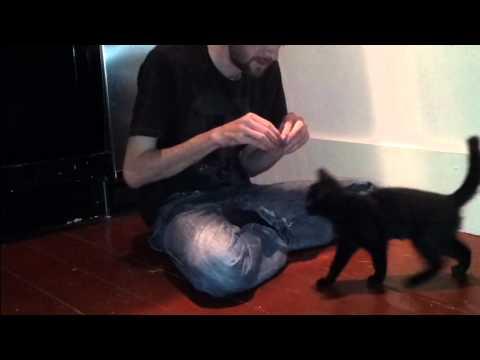 Cat trick training