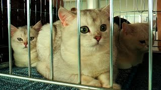 Международная выставка кошек в Харькове
