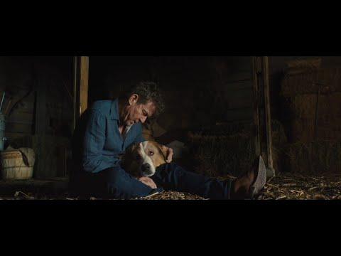 Bailey Death - The Dog's Journey