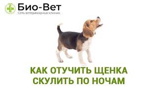 Как отучить щенка скулить по ночам. Ветеринарная клиника Био-Вет