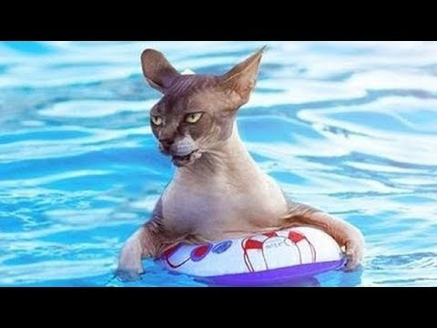 FUNNY CATS swimming - funny fails videos FFV