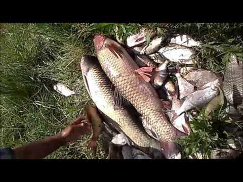 Рыбалка в новоульяновском ставропольский край