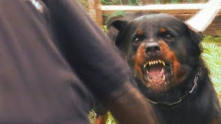 Stephen Guard Dogs Documentary