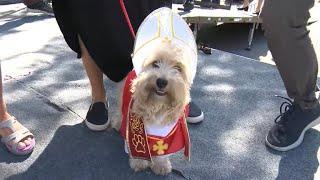 Pups dress up for NYC Halloween dog parade