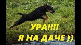 Собака на даче). Бассейн для собаки.
