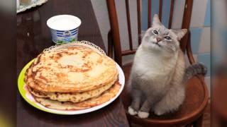 Кот с блинами
