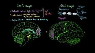 introduction to psychology brain changes during adolescence