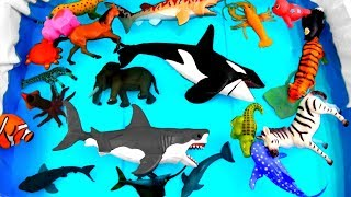 Wild Animals Learn Colors for Kids Safari Ocean Sea Animals