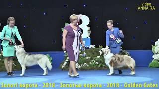 01 Конкурс Юный хендлер выставка собак ЗОЛОТЫЕ ВОРОТА 2018 Киев