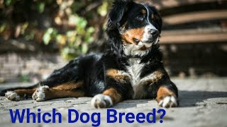 Guess the Dog Breed/Answers Below