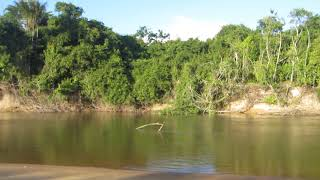 Rupununi River