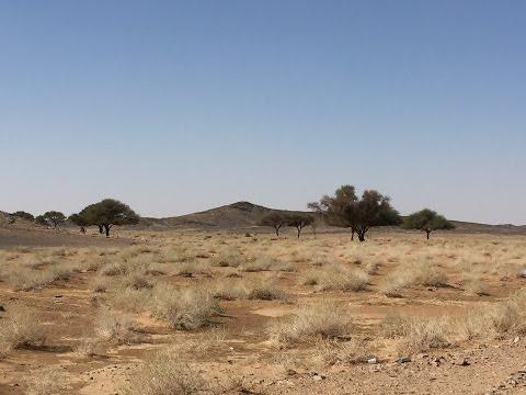 شاهد الطبيعة السعودية Wildlife in Saudi Arabia