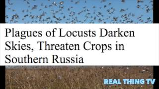 Plagues of Locusts Darken Skies, Threaten Crops in Southern Russia
