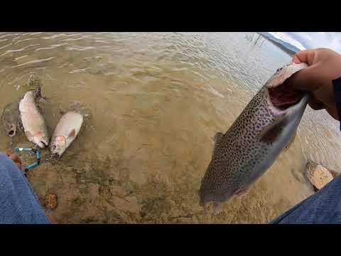 Castaic Lake Trout Fishing