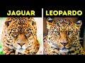 Los animales que siempre confundes
