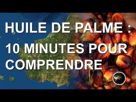 HUILE DE PALME : 10 MINUTES POUR COMPRENDRE