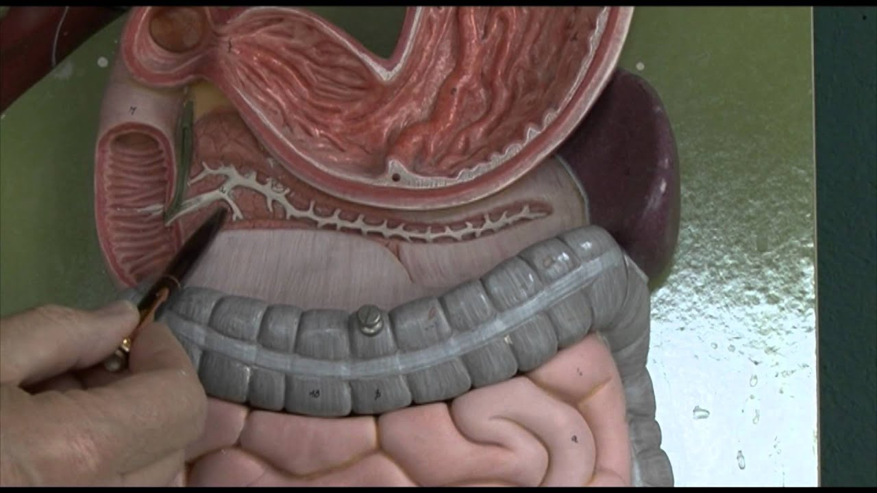 Anatomy 6 Gastrointestinal Tract Youtube