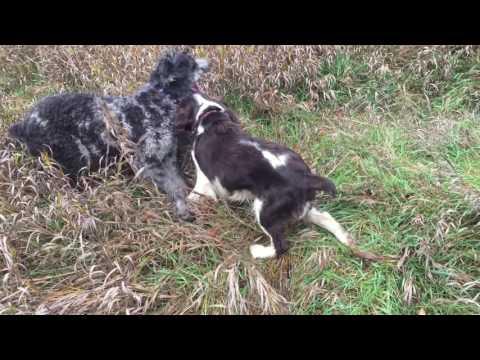 Chester and Coco in Mattison Field