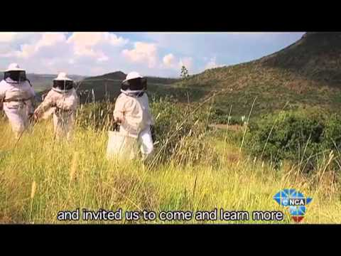 SA Heroes   Beekeeping Projects Create Opportunities for Unemployed