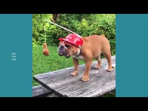 funny video cats and dogs compilation and pet city online