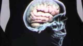 Notre ventre notre deuxième cerveau