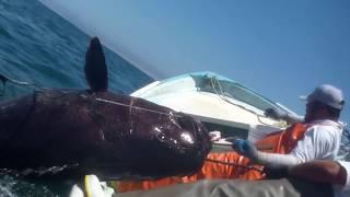 Thả câu ở biển bắt được cá khổng lồ lạ chưa từng thấy | fishing