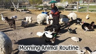Download Morning Animal Feed On The Farm Mp3 and Videos