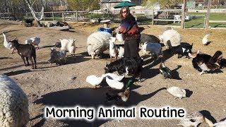 Morning Animal Feed On The Farm