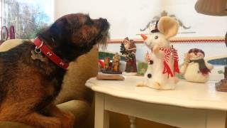 Border Terrier Singing Let It Snow