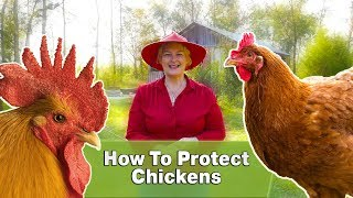 How To Protect Chickens From Hawks & Foxes
