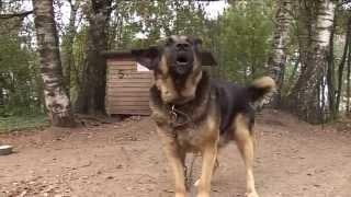 Video, защита животных
