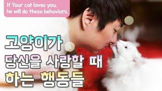 고양이가 당신을 사랑할 때 하는 행동들 If Your cat loves you, he will do these behaviors.