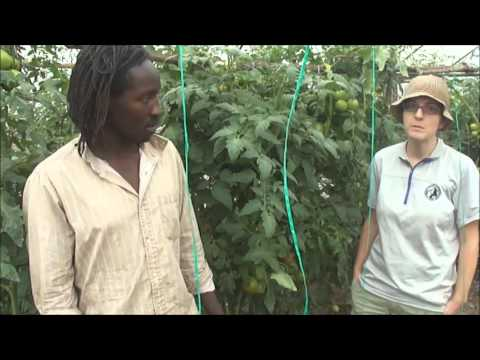 Pest control for organic farmers