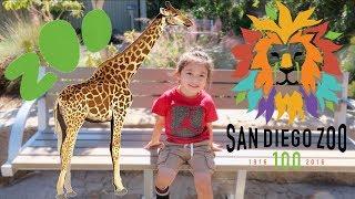 damian-s-birthday-trip-san-diego-zoo