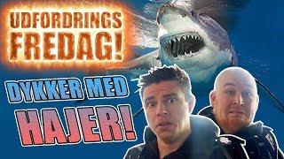 Udfordrings-fredag - Dykker med hajer