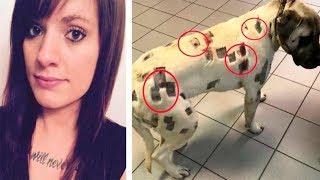 Женщина думала, что ее собаку покусали насекомые, но увидев раны, вызвала полицию