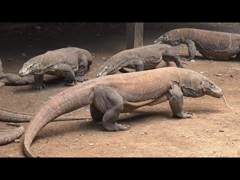 Komodo National Park, Indonesia in 4K (Ultra HD)