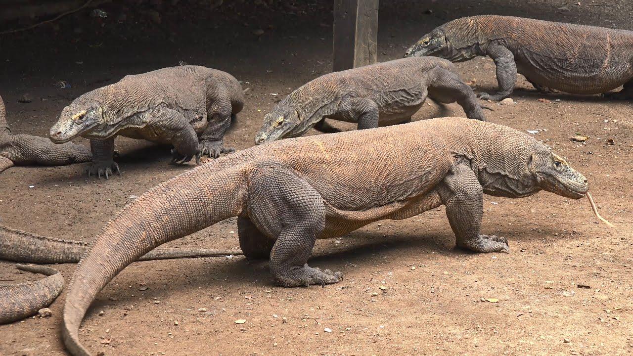 Komodo National Park, Indonesia in 4K (Ultra HD) - YouTube