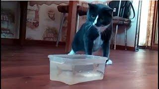Кот боится рыбы