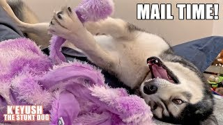 Husky Wrestles An Octopus! Mail Time.