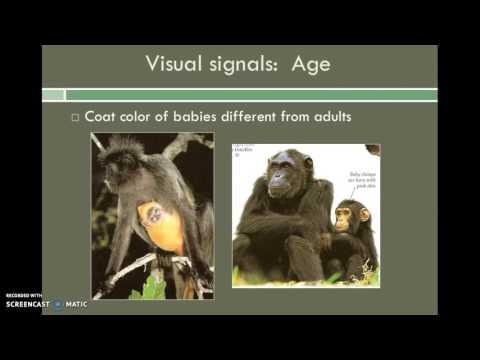 Lesson 10 - Primate Behavior & Social Organization